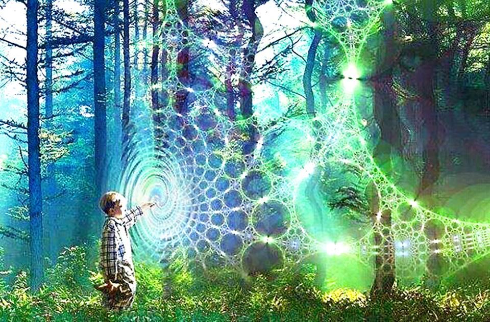 天使能量屋_森林